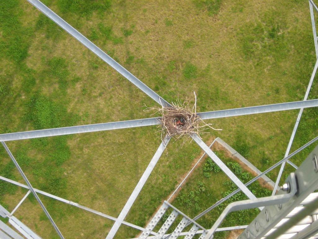 Vögel nutzen Windkraftanlagen als Brutplätze